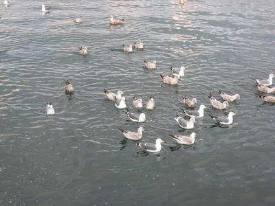 IMG_1994鳥