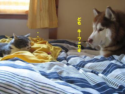 IMG_3402見合い