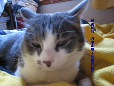 IMG_3406ぷう