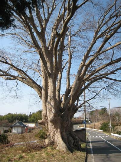 IMG_3488巨木