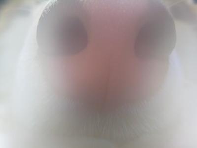 IMG_3547曇った