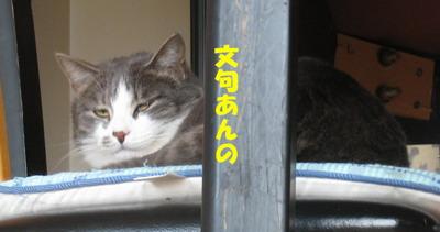 IMG_3695ぷう
