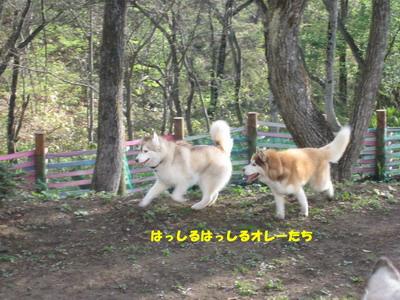 IMG_4646走る