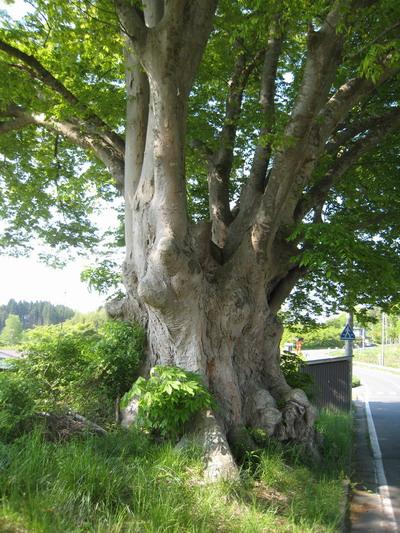 IMG_5484巨木