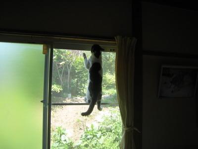 IMG_6498忍者猫