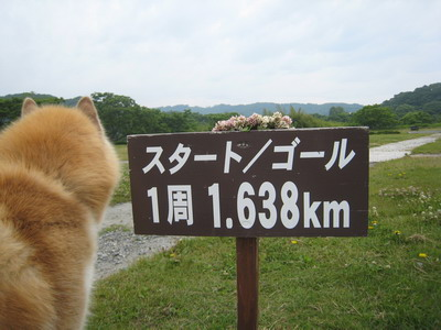 IMG_7384散歩