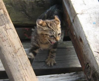IMG_7567子猫