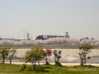 20090413-12.jpg