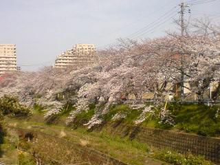 20090413-5.jpg