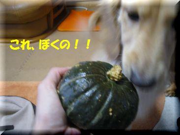 かぼちゃ チャッピー