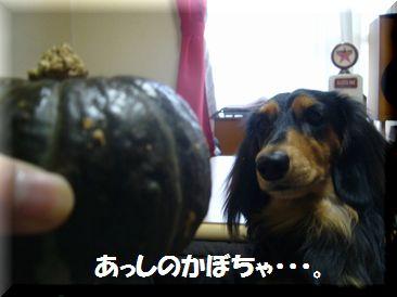 かぼちゃ ロイ