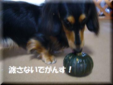 かぼちゃ ロイ2