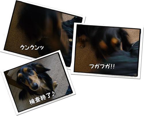 2009062201.jpg