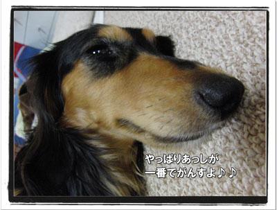 2009070904.jpg