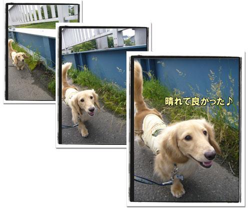 2009071401.jpg