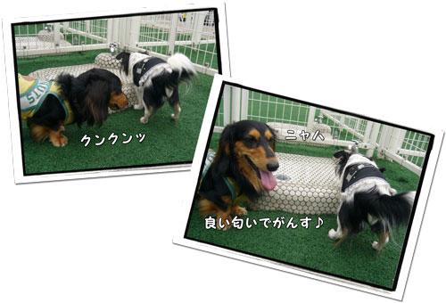 2009080904.jpg