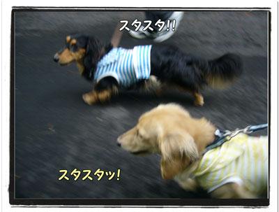 2009617ji2.jpg