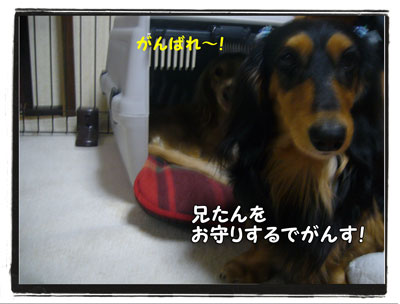 hamigaki3.jpg