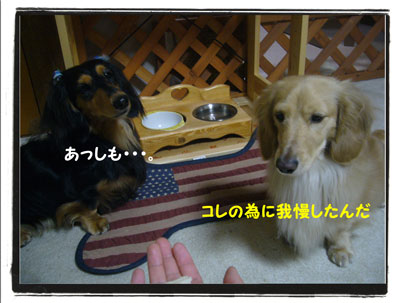 hamigaki5.jpg
