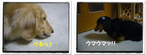 hamigaki6.jpg