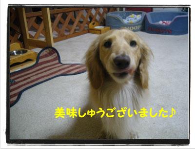 hamigaki7.jpg