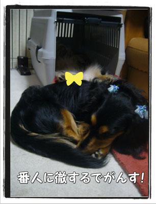 hausu4.jpg