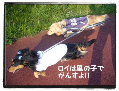 kazenoko1.jpg