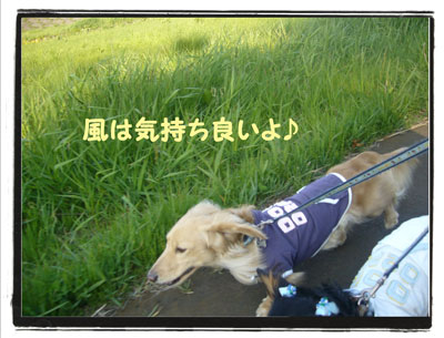 kazenoko2.jpg