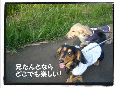 kazenoko3.jpg