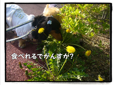 kazenoko4.jpg