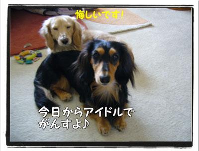 sinbun3.jpg
