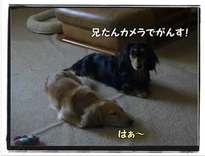 tuchinoko1.jpg
