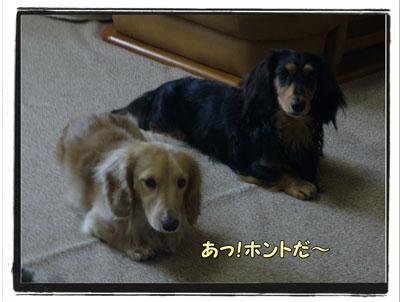 tuchinoko2.jpg