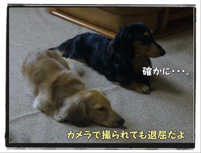 tuchinoko3.jpg