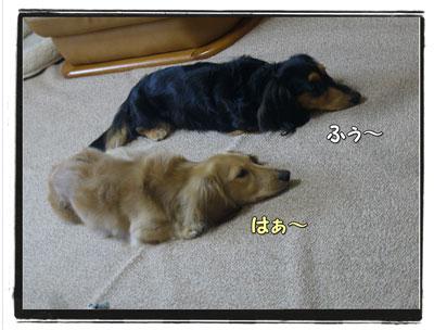 tuchinoko4.jpg