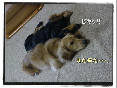 tuchinoko5.jpg