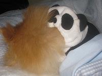 パンダに…