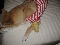 ピーピー腕枕で寝る