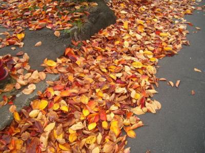 桜川 落ち葉