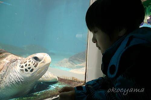 浅虫水族館800万人記念 カメとたか坊