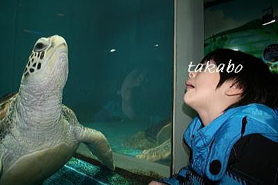 浅虫水族館800万人記念 カメとたか坊2