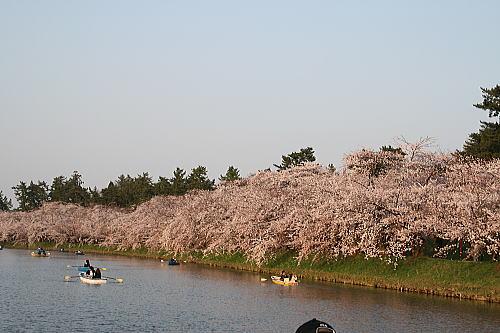 弘前公園夜桜 西壕②