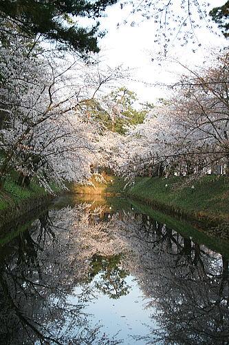 弘前公園夜桜 工業高校側