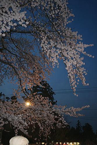弘前公園夜桜 園内ライトアップ
