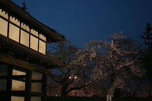 弘前公園夜桜 北門