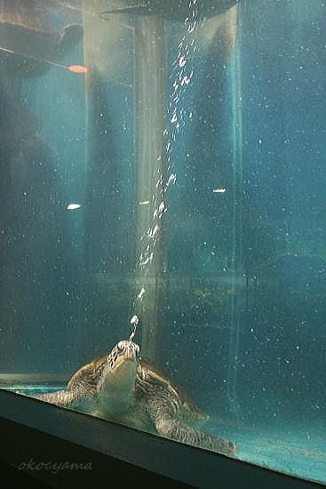 水族館2008.6.28