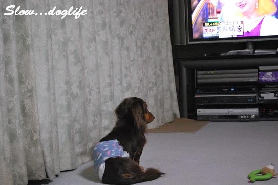 TVを見てるんだよ