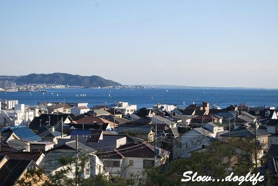 長谷寺より海を望む