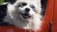 dog_glasses_232.jpg