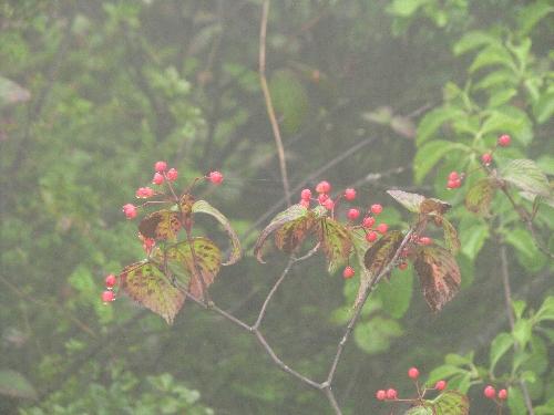 9 木の実2